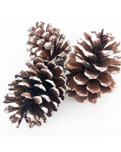 Frosted Pine Cones - Tiered Tray Decor - Foundations Decor