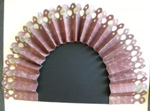 turkey tail 2