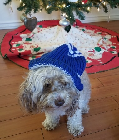 this beanie on a dog demonstrates anybody can make crafts for charity